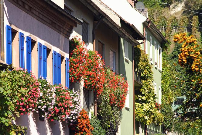 Häuseransicht Vogtsburg-Achkarren